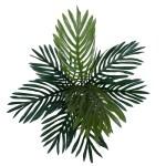 Palmier tufa H50 1