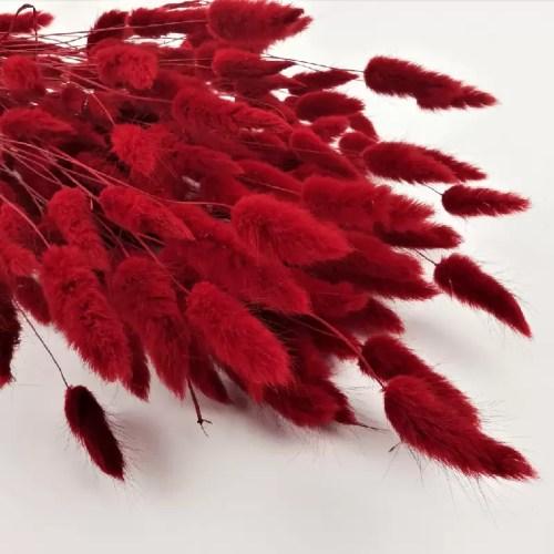 Phalaris rosu