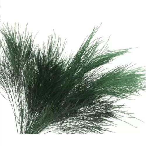 Planta conservata Feriga Tree Fern verde