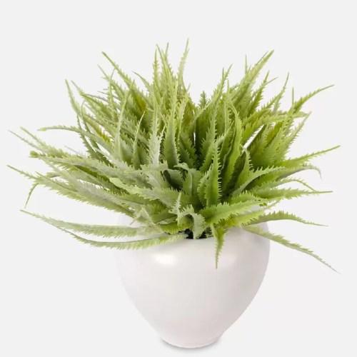 Planta mini Aloe pic