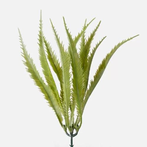 Planta mini Aloe