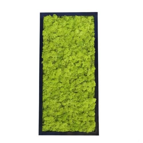 Tablou licheni stabilizati 25x50cm rama neagra