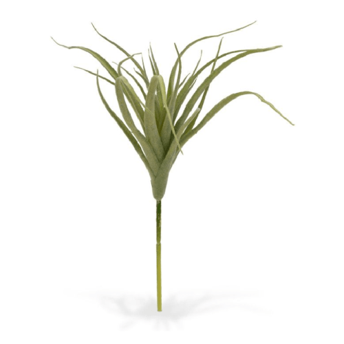 Tilandia mini