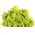 licheni vrac artflora green lime