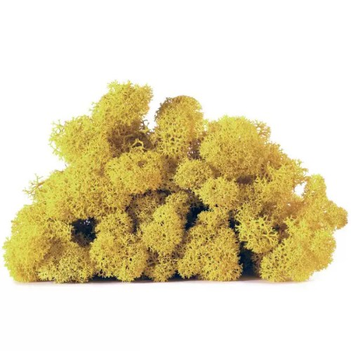 licheni vrac artflora yellow lime