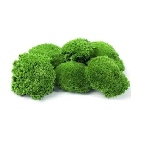 mini ballmoss greenapple