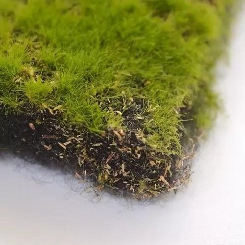 muschi artificial tip carpeta zoom