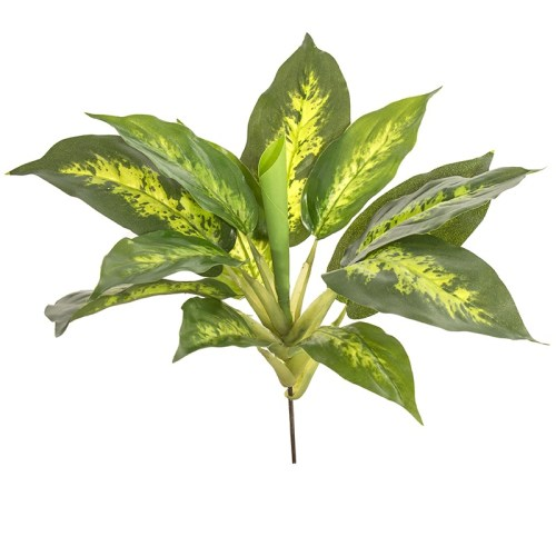 Diffenbachia tufa 26cm