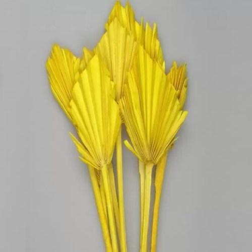 Frunze Palmier mini galben set