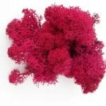Licheni premium Hot Pink