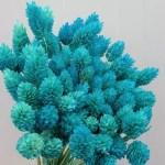 Phalaris albastru turquoise set