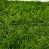 artflora flat grass 1
