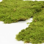artflora rocky moss