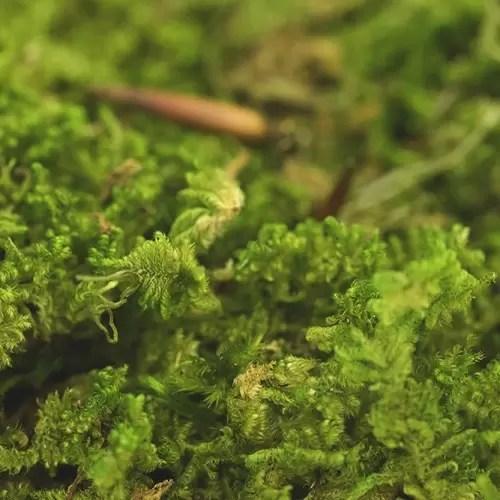 artflora rocky moss 1