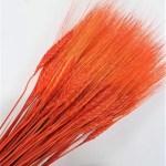 grau uscat mustati portocaliu