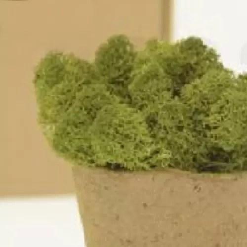 licheni premium green forest 1
