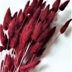 planta uscata lagurus bordo