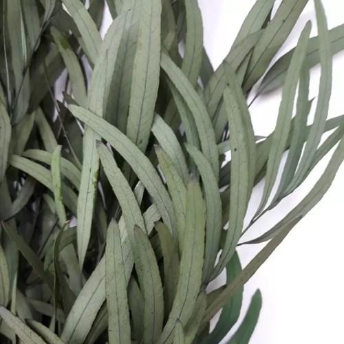 Eucalipt conservat Nicoly verde cald