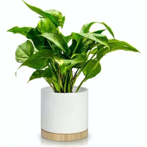 Ghiveci ceramic Bamboo 13cm planta