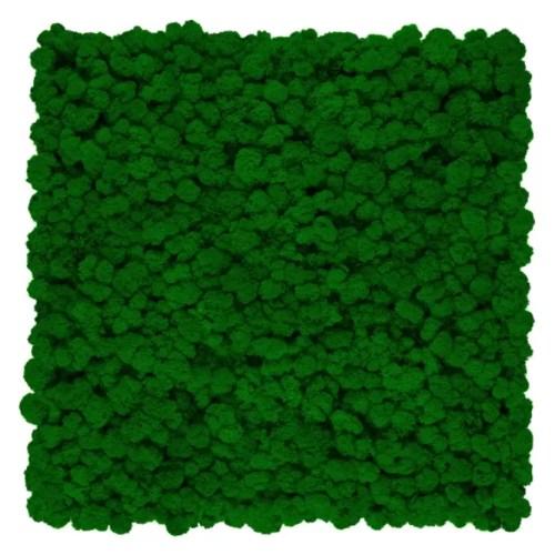 Gradina verticala Licheni Green Grass