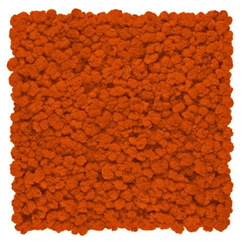 Gradina verticala Licheni Orange Flame