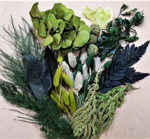 Set plante conservate si uscate Mini Green pack
