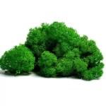 artflora green grass curatati