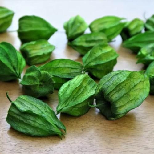 Flori Physalis stabilizate verde pic
