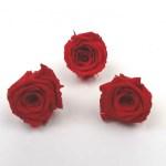 Trandafir mini stabilizat x12 rosu