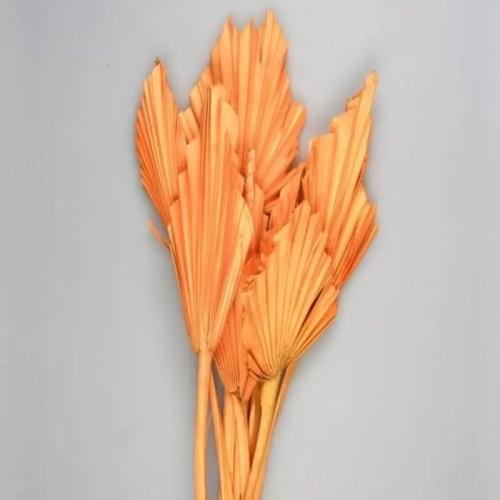 Frunze Palmier mini oranj set