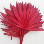 Frunze Palmier soare Rosu set