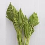 Frunze palmier mini verde deschis