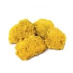 Muschi bombati mini Limone pic