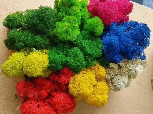 paletar culori licheni premium e1634139258386
