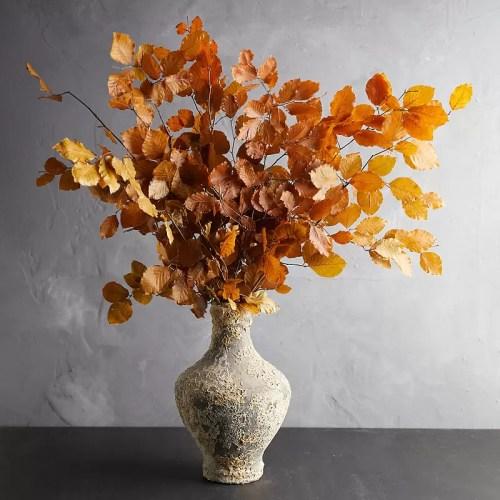 Creanga fag conservat Oranj