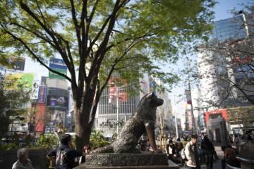 3 Lokasi Bagus Untuk Berfoto Di Harajuku Dan Shibuya