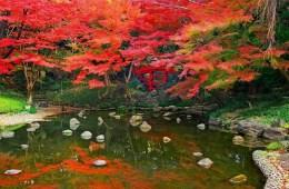 Nikmati Musim Gugur Yang Indah Pada Taman Koishikawa Korakuen Di Tokyo