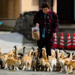 Pulau Kucing Aoshima Berencana Kurangi Jumlah Populasi Kucing