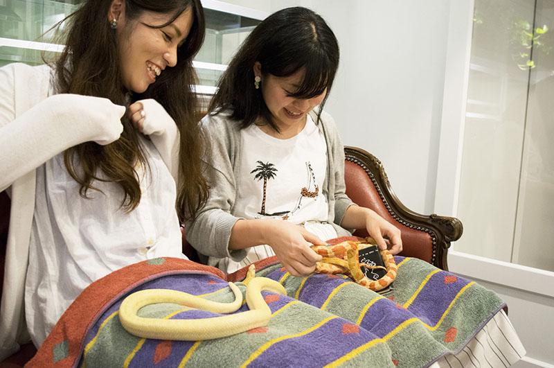 Serunya Bersantai Dengan Hewan Peliharaan Di Cafe Hewan Kota Tokyo