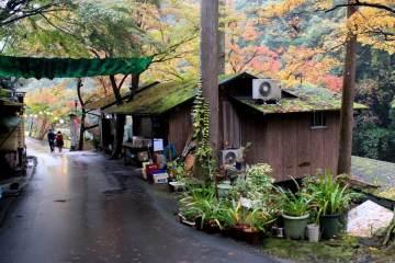 Wisata Alam Di Tokyo ? Siapa Bilang Tidak Bisa, Ini Dia Salah Satunya !