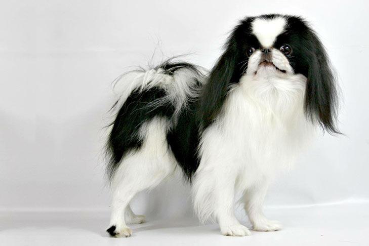 10 Jenis Anjing Jepang Yang Paling Disukai