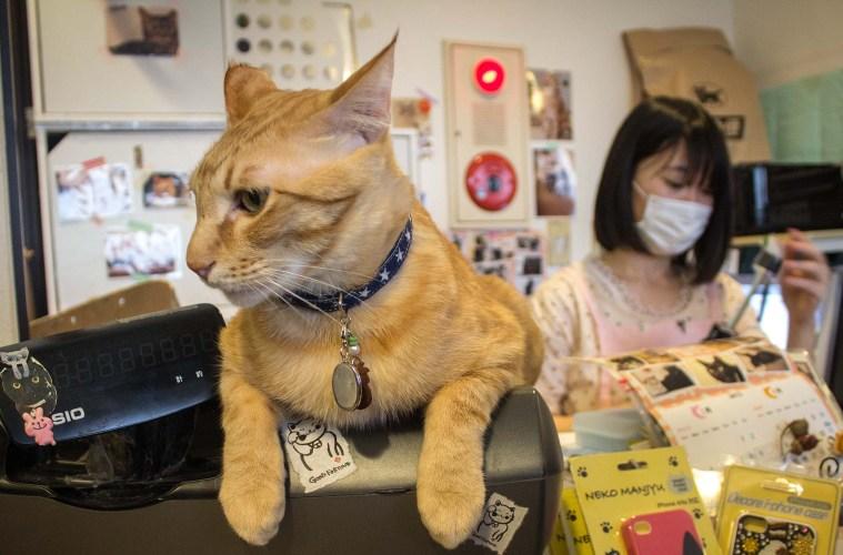 5 Hewan Peliharaan Yang Populer Di Kalangan Masyarakat Jepang