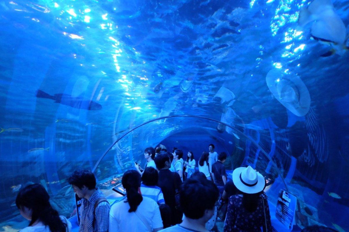 5 Wisata Aquarium Terbaik Yang Ada Di Pusat Kota Tokyo