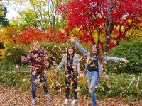 Hal-Hal Menarik Yang Dapat Kamu Lakukan Pada Bulan November Di Kota Tokyo