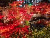 5 Kuil Terbaik Yang Dikunjungi Saat Malam Hari Di Kota Kyoto