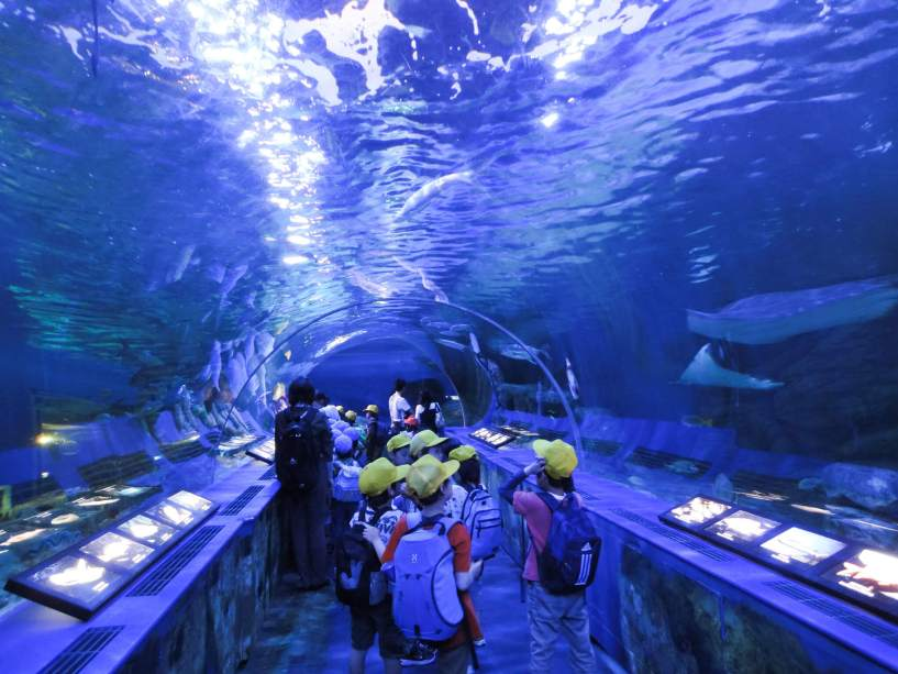 5 Rekomendasi Wisata Aquarium Terbaik Yang Ada Disekitar Kota Tokyo