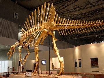 Fakta Mengenai Jejak Dinosaurus Yang Pernah Tinggal Di Dataran Jepang