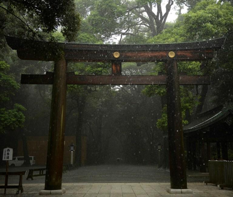 Mempelajari Kesabaran Dan Pentingnya Sumber Kehidupan Dari Hutan Abadi Kuil Meiji Jingu