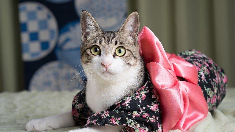 Produk Unik, Popok Untuk Kucing Yang Akan Hadir Di Jepang