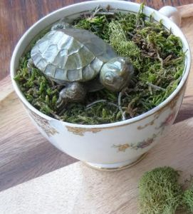 bronze turtle cup